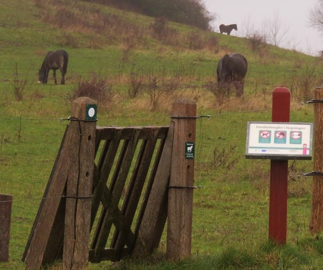 Vandretur hos de vilde heste på Sydlangeland