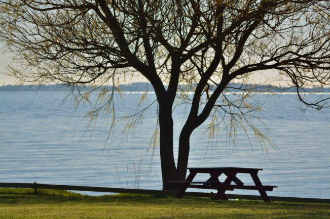 udsigt med træ og bænk foran havet