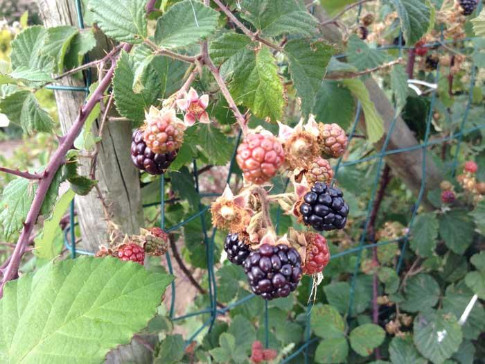 Rundvisning med fokus på frugt og bær